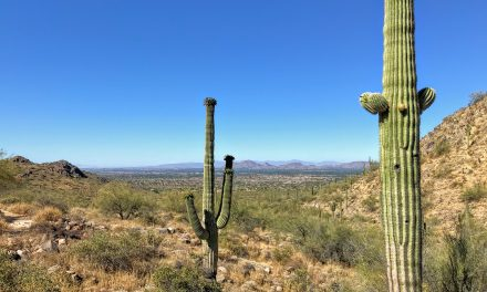 Gateway Loop Hike, McDowell Sonoran Preserve