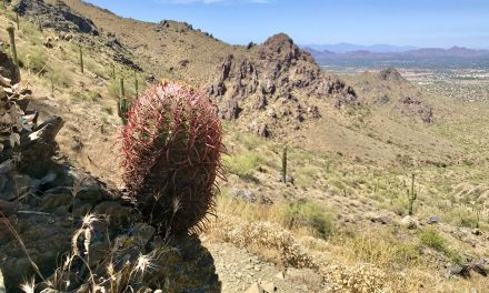 Bell Pass Hike, McDowell Sonoran Preserve