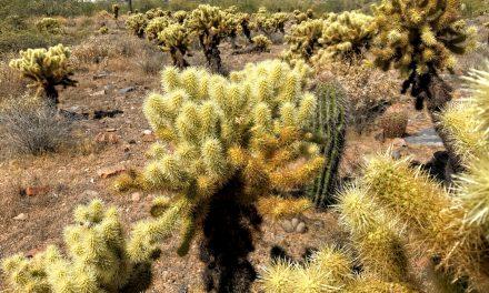 Horseshoe Trail Hike, McDowell Sonoran Preserve