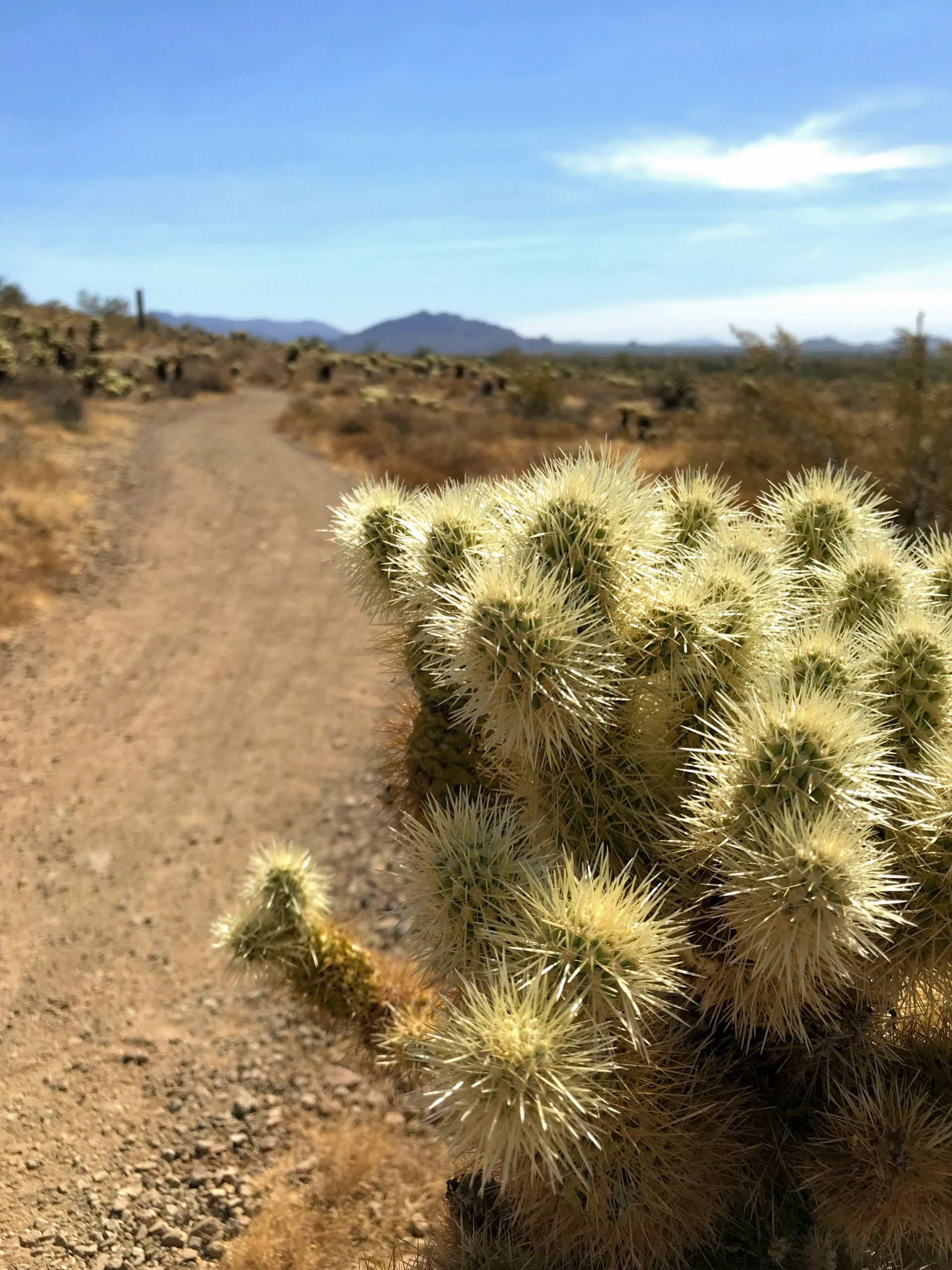 Sidewinder trail hike Phoenix Sonoran Preserve views north