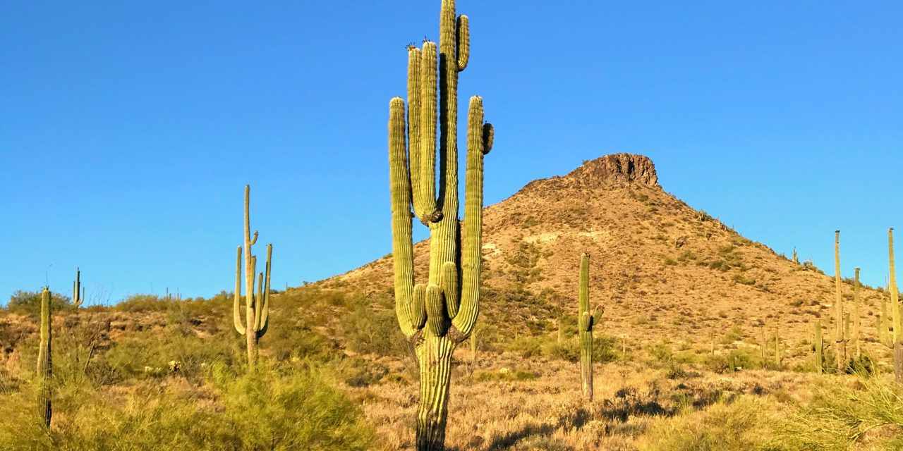 Hiking Around Brown's Mountain, McDowell Sonoran Preserve