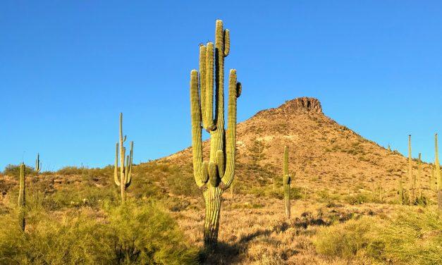 Hiking Around Brown's Mountain, McDowell Sonoran Preserve