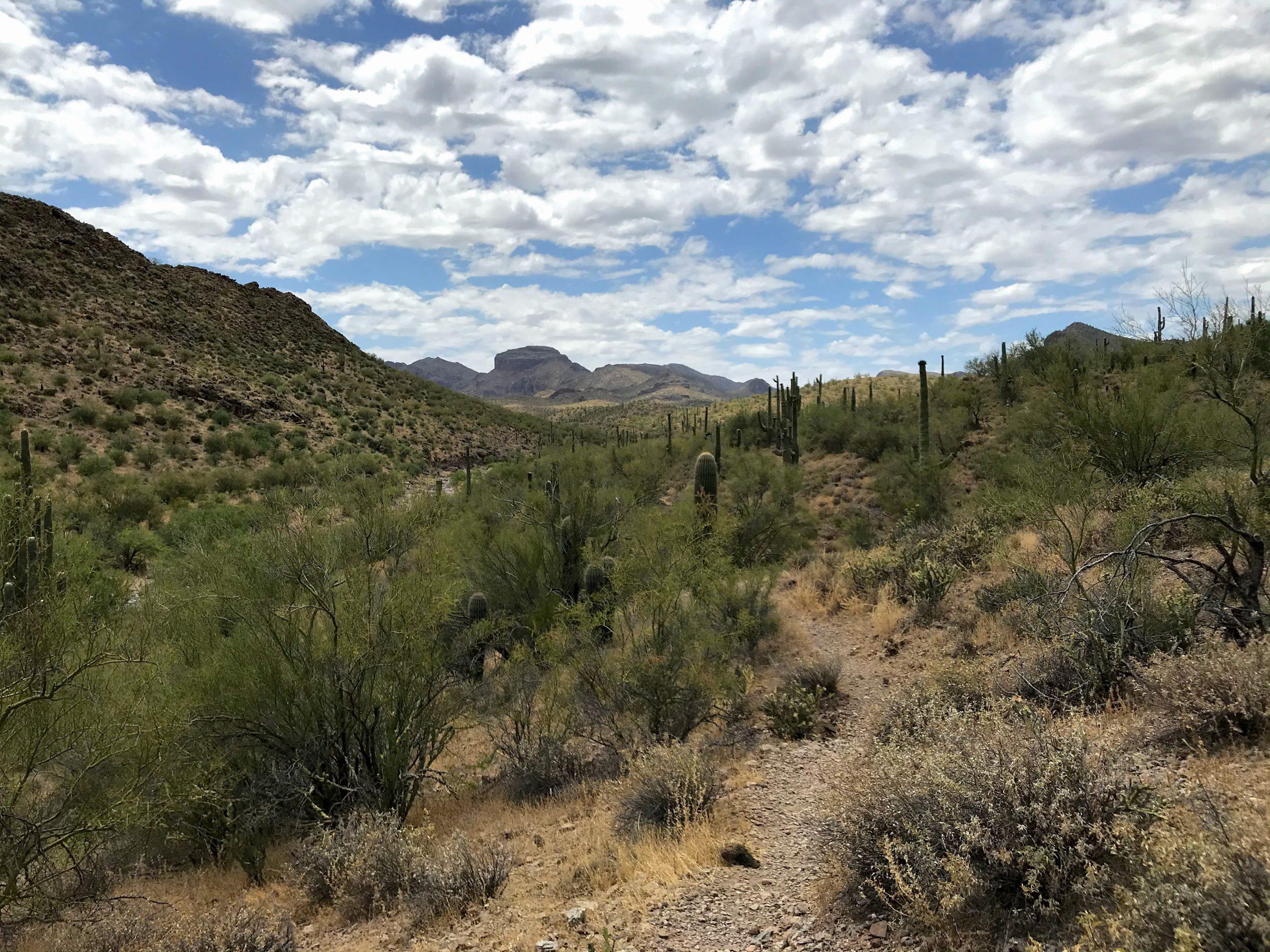 Walkin' Jim Trail Hike Mountain Views2