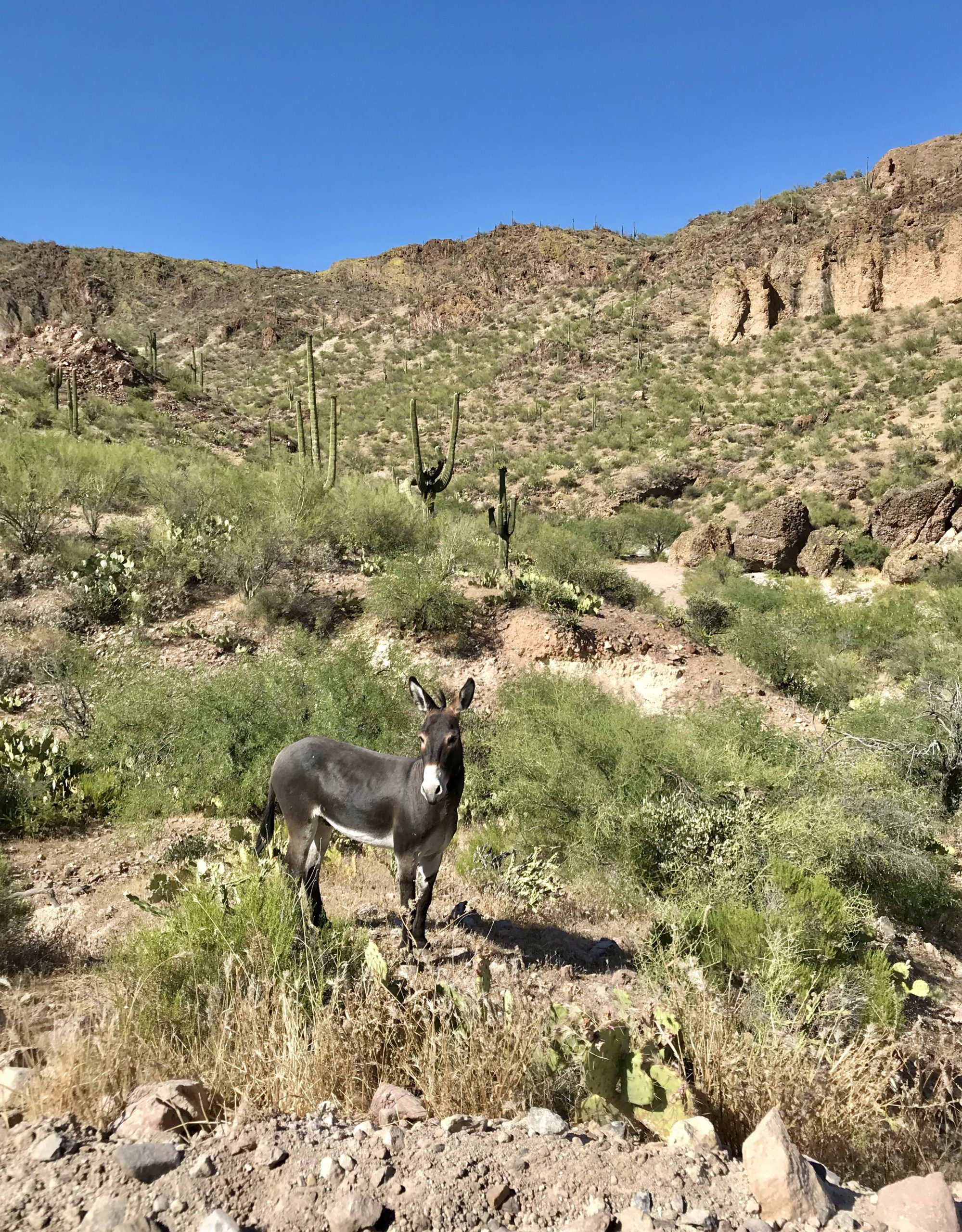 Walkin' Jim Trail Hike Wild Burro