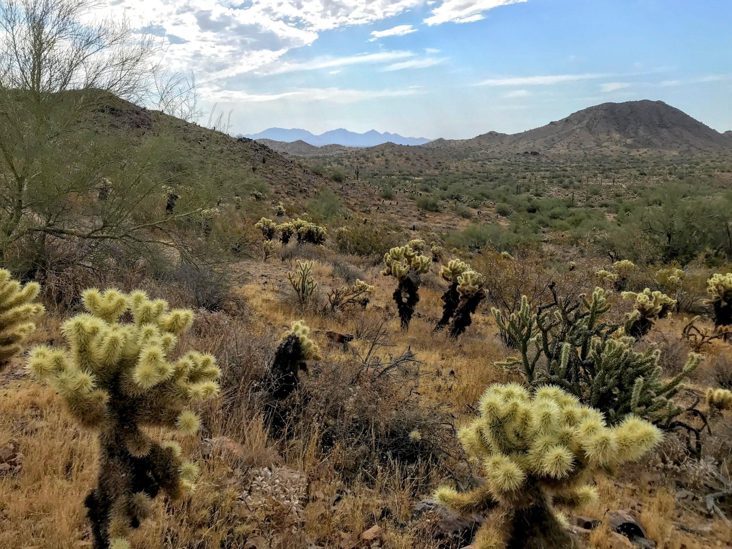 Desert Vista Trailhead Hikes, Phoenix Sonoran Preserve McDowells views