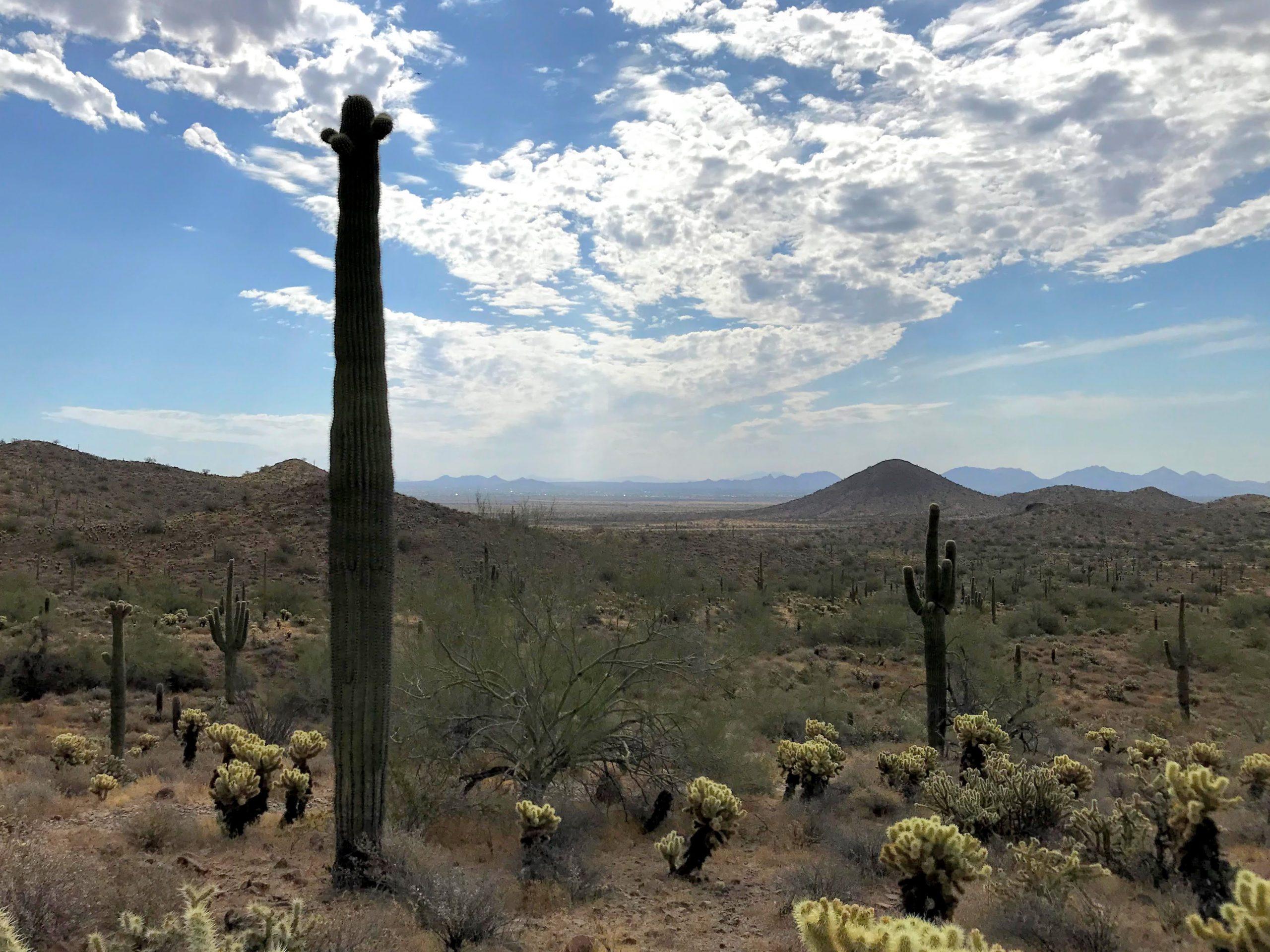 Desert Vista Trailhead Hikes, Phoenix Sonoran Preserve more McDowells views