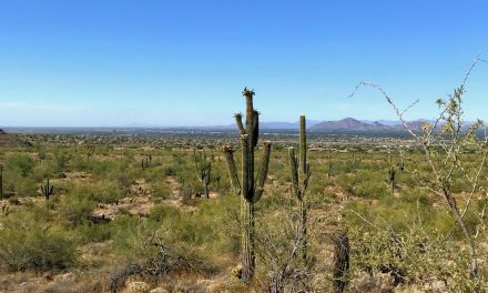 Levee Trail Hike, McDowell Sonoran Preserve