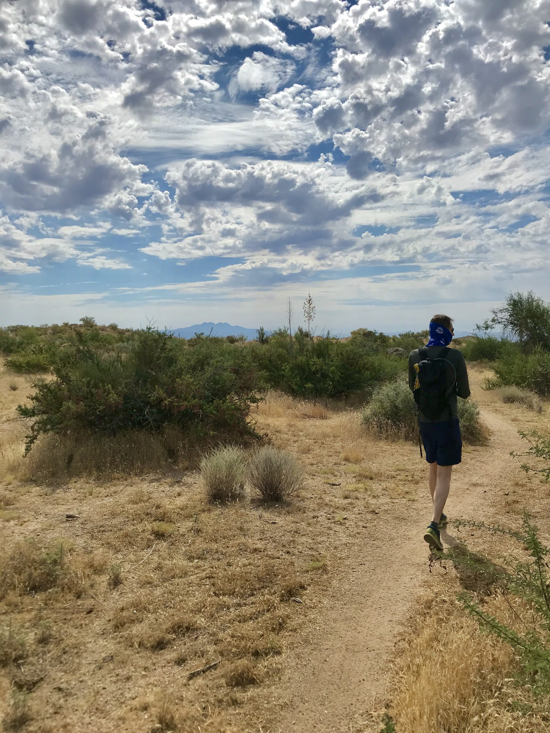 Saguaro Nest Trail McDowell Sonoran Preserve service road