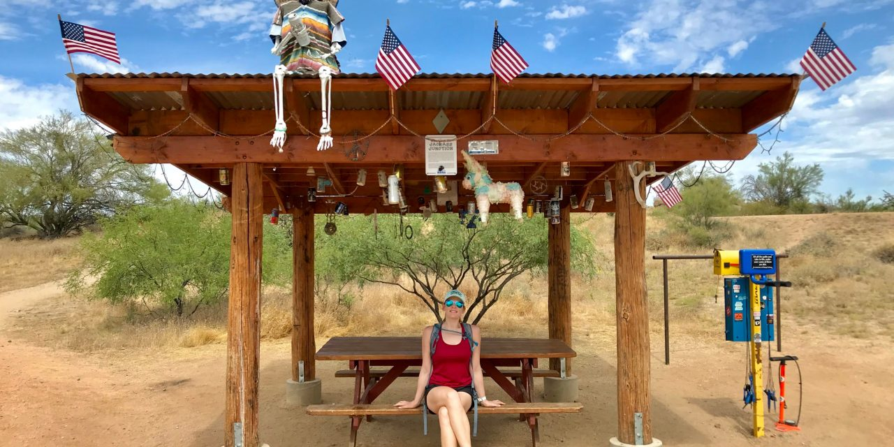 Saguaro Nest Trail Hike, McDowell Sonoran Preserve