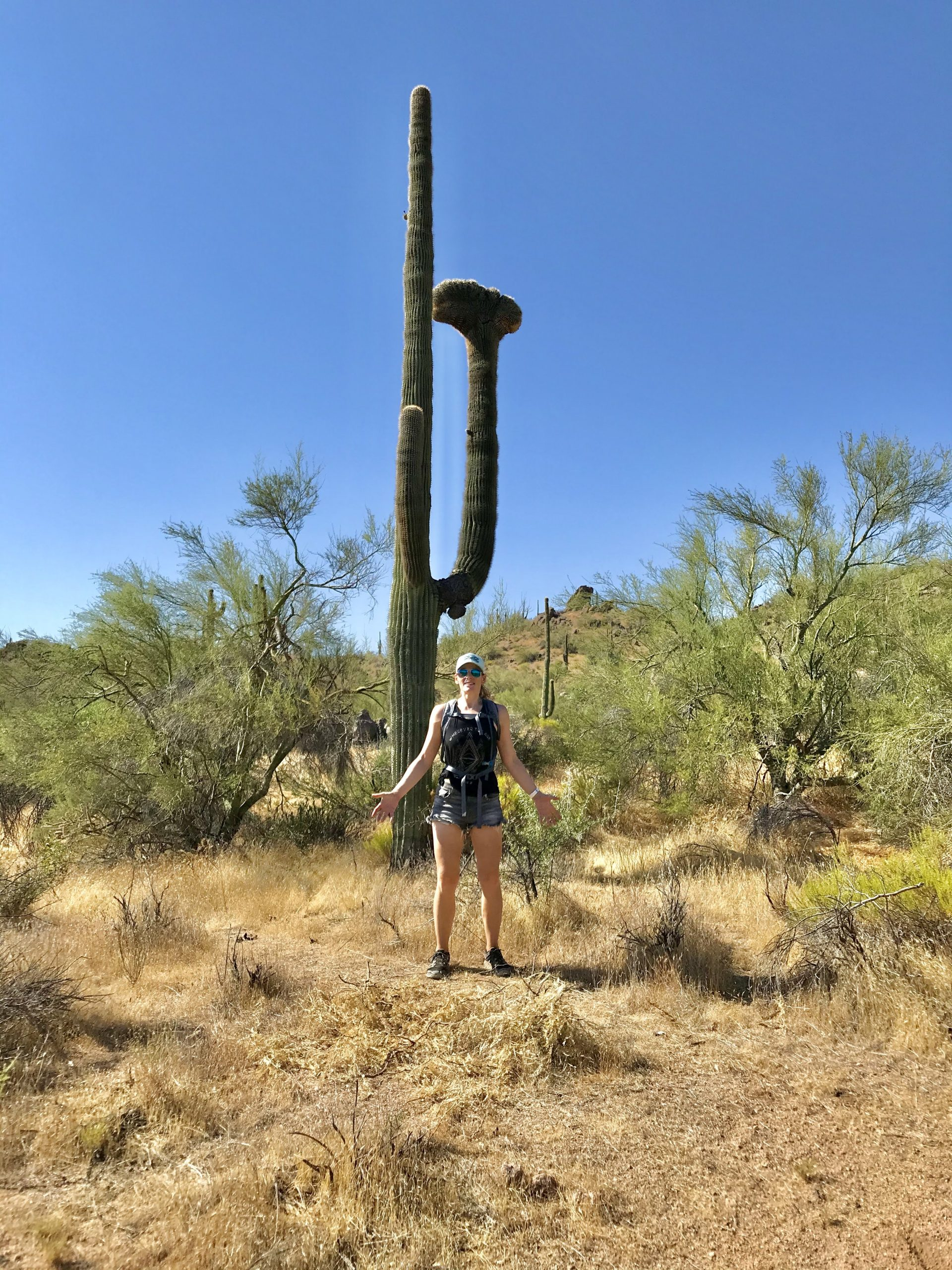 136th St Express/Cow Poke Trail found a crested saguaro