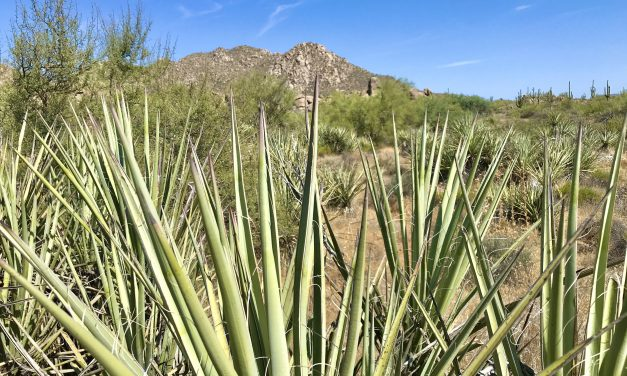 136th St Express/Cow Poke Loop Hike, McDowell Sonoran Preserve