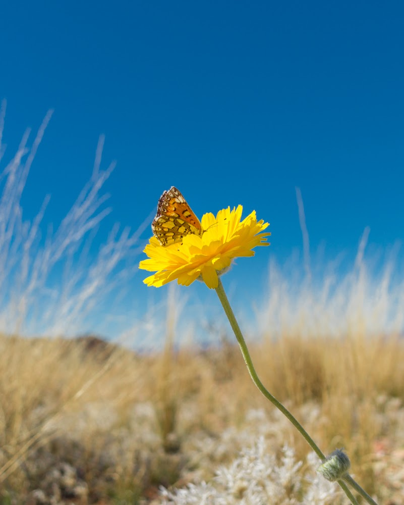 15 practical ways to motivate yourself to get outside butterfly in Big Bend