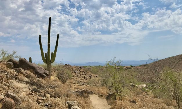 Sunrise Trail Hike, McDowell Sonoran Preserve