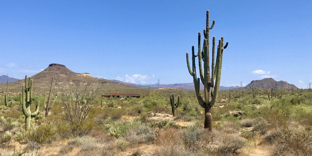 Latigo Chuckwagon Loop Hike, McDowell Sonoran Preserve