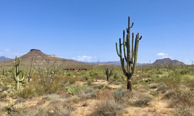 Latigo Chuckwagon Loop Hike, McDowell Sonoran Preserve